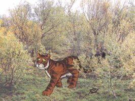 Tiger in a Lapin birch forest by PaulEberhardt