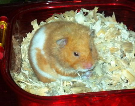 Butters the Hamster by BloodyVoodoo