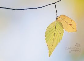 Fall Leaves by CandiceSmithPhoto