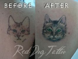 Cat cover by Reddogtattoo