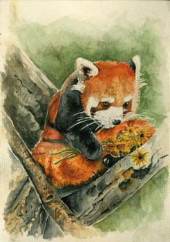Red panda with yellow flowers by emo88