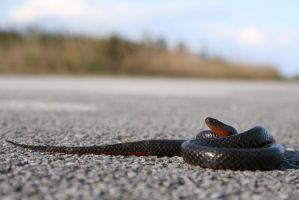 Snake on the path by riktorsashen