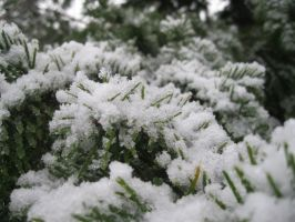 Tree covered in snow... by TMNT224