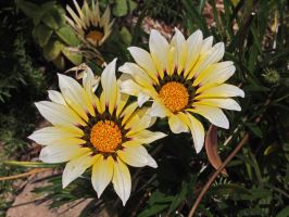 San Diego Flowers by captainslack