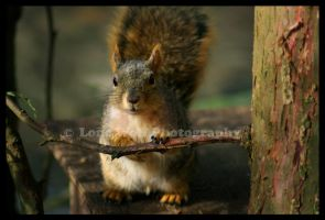 Nosey Neighbor by LoneWolfPhotography