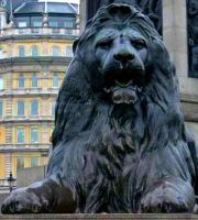 Trafalgar Square Lion by Paddington-Owl