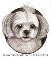Pet Shih Tzu Portrait by FlyingFancy1