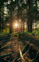Woodland sundown by SevenHeptagons