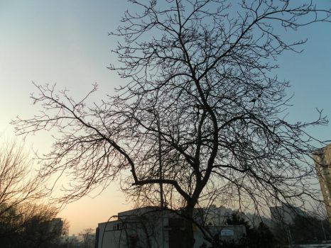 Tree and sky 1 by Yveren