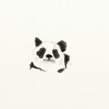 Giant Panda by starduskmoon