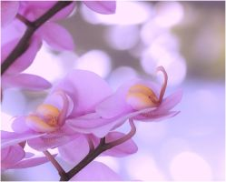 Orchids and Light II by aquapell