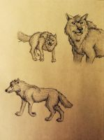 Wolf scetch by HoneyCricket