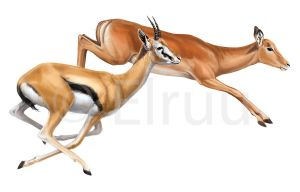 Runing antelopes by Elruu
