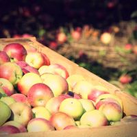 Apple Carpet and Apple Crate by TinyOmelet