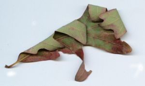dried leaf-green and red by tash11-stock