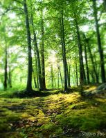 Forest by PhotographybyVictor