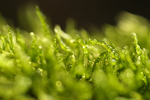 Moss by DorotejaC
