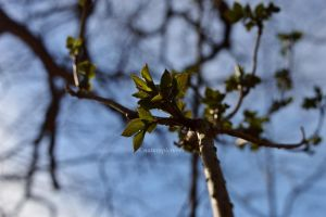 signs of spring 2 by XnaturepicturesX
