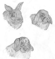 Bunnyrabbit Sketches by caitiedidd