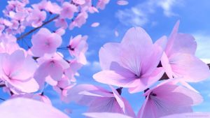 Cherry Blossoms in Blender by Byron1c