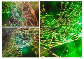 The web by Sula88
