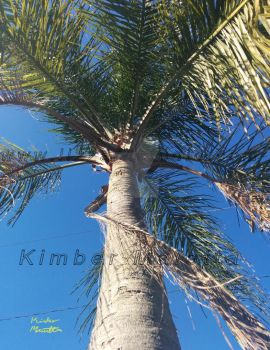 Up Palm Tree-KimberMaietta by PirateLizzie