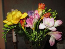 Freesias by MaguschildCloud