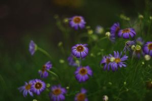 Small flowers by Winstein