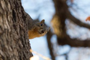Squirrel by AmyranthPhotography