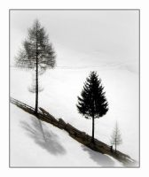 three trees by Mittelfranke