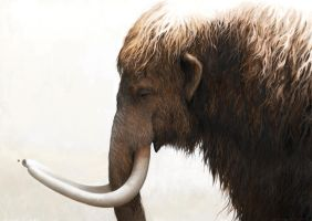 Woolly mammoth and a painted lady by Renum63
