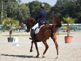 National Dressage and Jumping_72 by CalyHoney