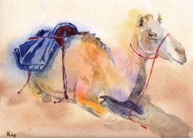 Colourful camel by MagdalenaWolff