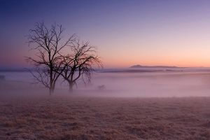 Another misty shot by carlosthe