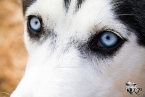 In the eyes of a rescued dog by kelleymorgan