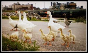 Geese and factories part two by DimmedFaith
