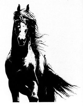 Black Beauty by Catti-brie1990