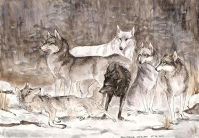 ASOIAF: Direwolves by ThePyf