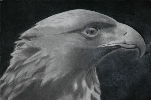 Eagle by MadStar
