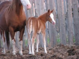 Mare and Foal 10 by okbrightstar-stock