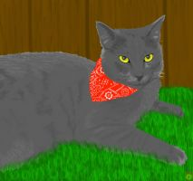 Realism Practice: Smokey the cat by narupikalover