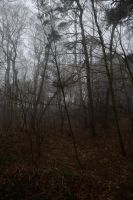 Fog in the forest 4 by Risandell
