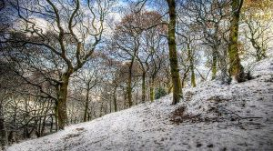 Winter Spring Woods by taffmeister