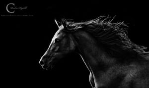 Arabian Yearling by Colourize