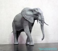 African Elephant by GalileoN