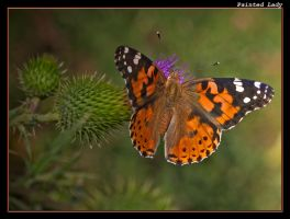 Painted Lady 10 by boron