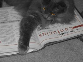 My Cat The Scholar by beverly546