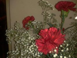 Dancing Carnations by delinquant