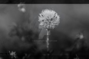 Untitled by morquee