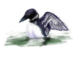 loon by The-Corvus-Corax